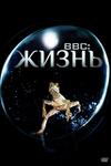 BBC: Жизнь