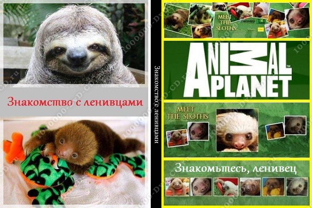 Знакомства с ленивцами смотреть онлайн